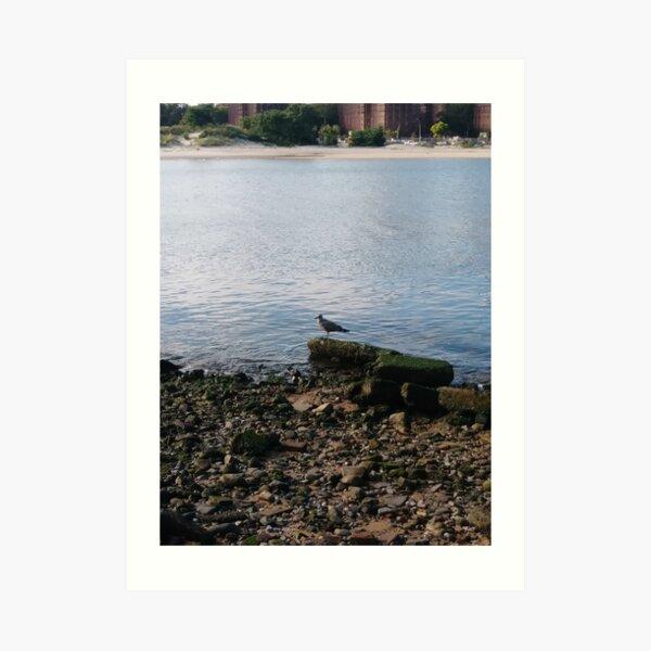 #water, #sea, #outdoors, #beach, #bird, #nature, #landscape, #island Art Print