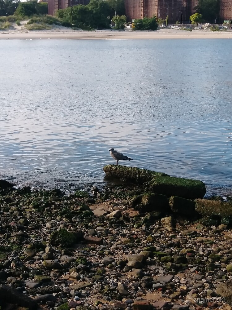 #water, #sea, #outdoors, #beach, #bird, #nature, #landscape, #island by znamenski