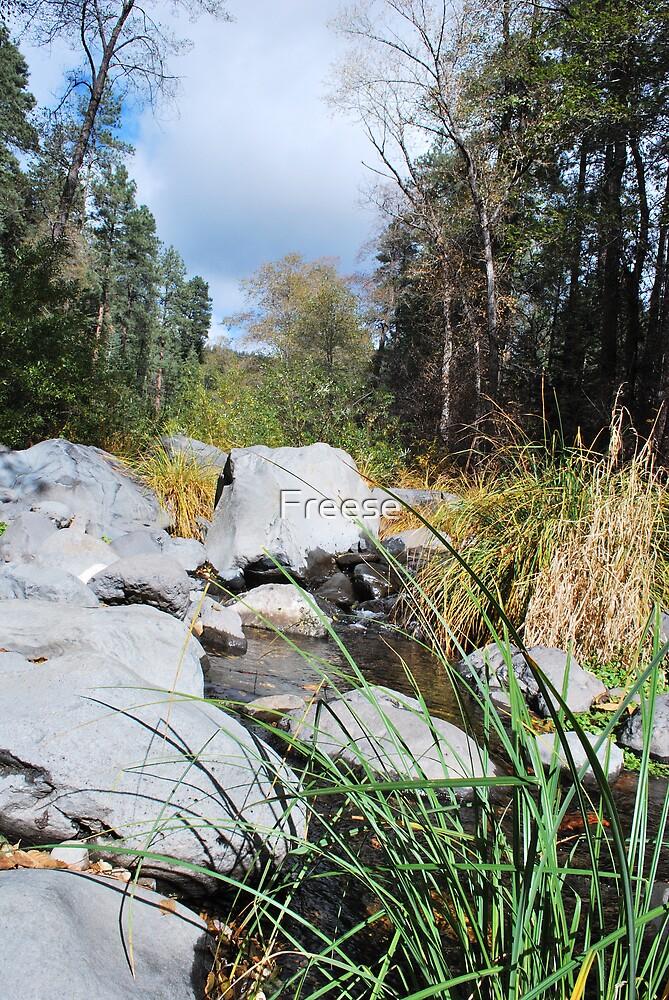 Oak Creek by Freese