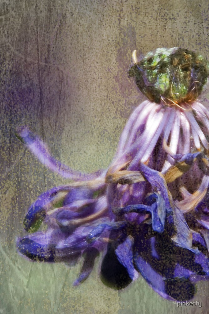 withering anemone detail by picketty