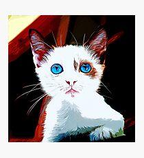 gxp cute cat blue eyes vector art  Photographic Print