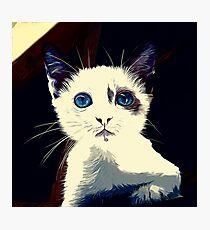 gxp cute cat blue eyes vector art foggy night Photographic Print