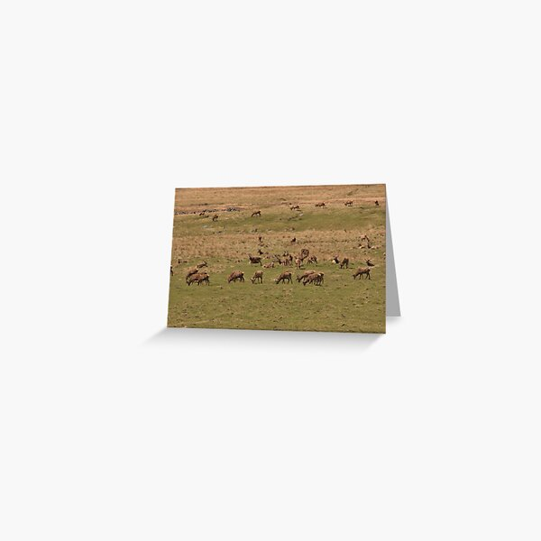 Red Deer Herd at Loch Muick Greeting Card