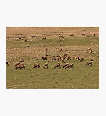 Red Deer Herd at Loch Muick Photographic Print