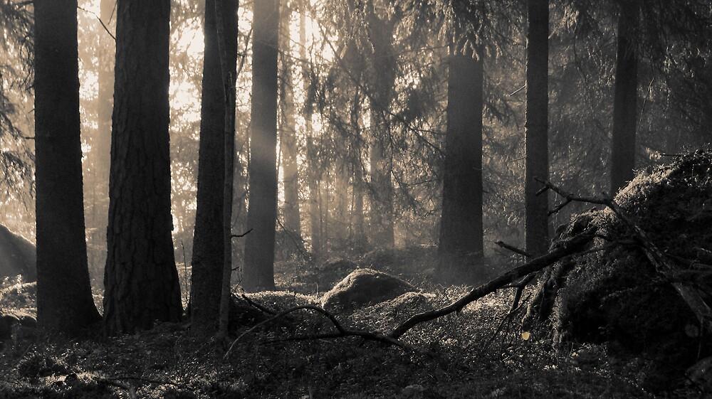 1.10.2009: Autumn's Jewel by Petri Volanen