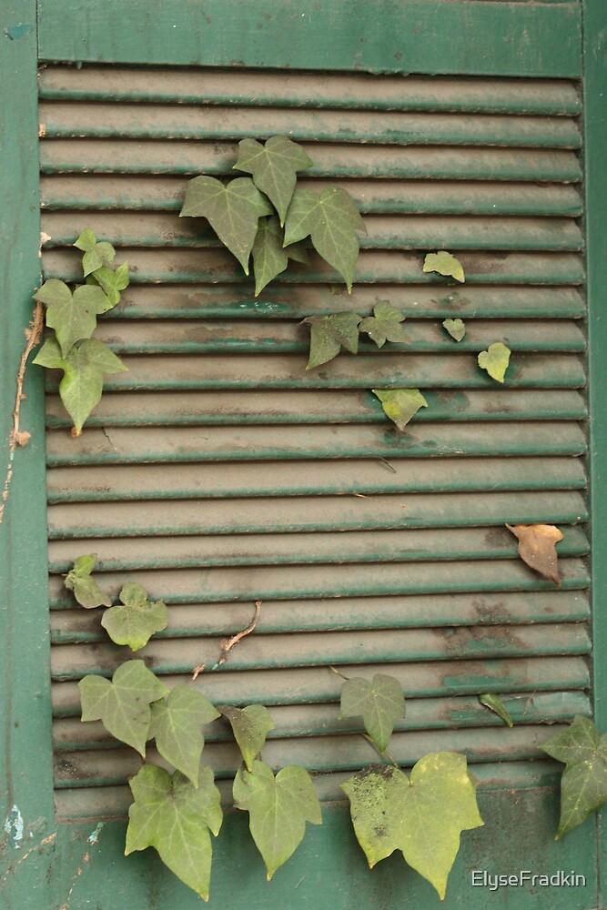 Shuttered Leaves by ElyseFradkin
