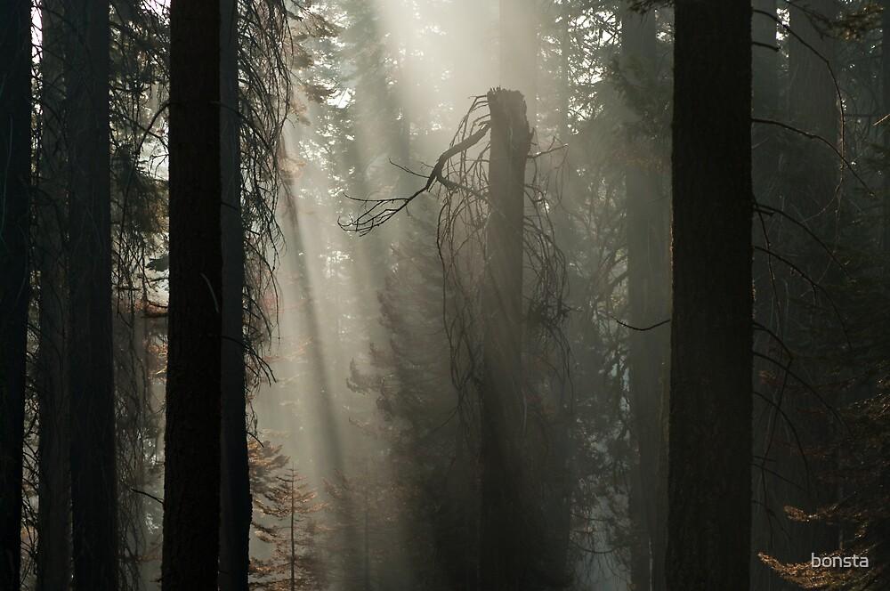 Morning sun through smoke by bonsta