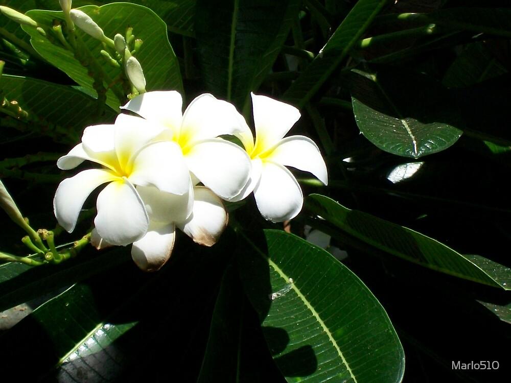 Hawaiian Sweetness by Marlo510