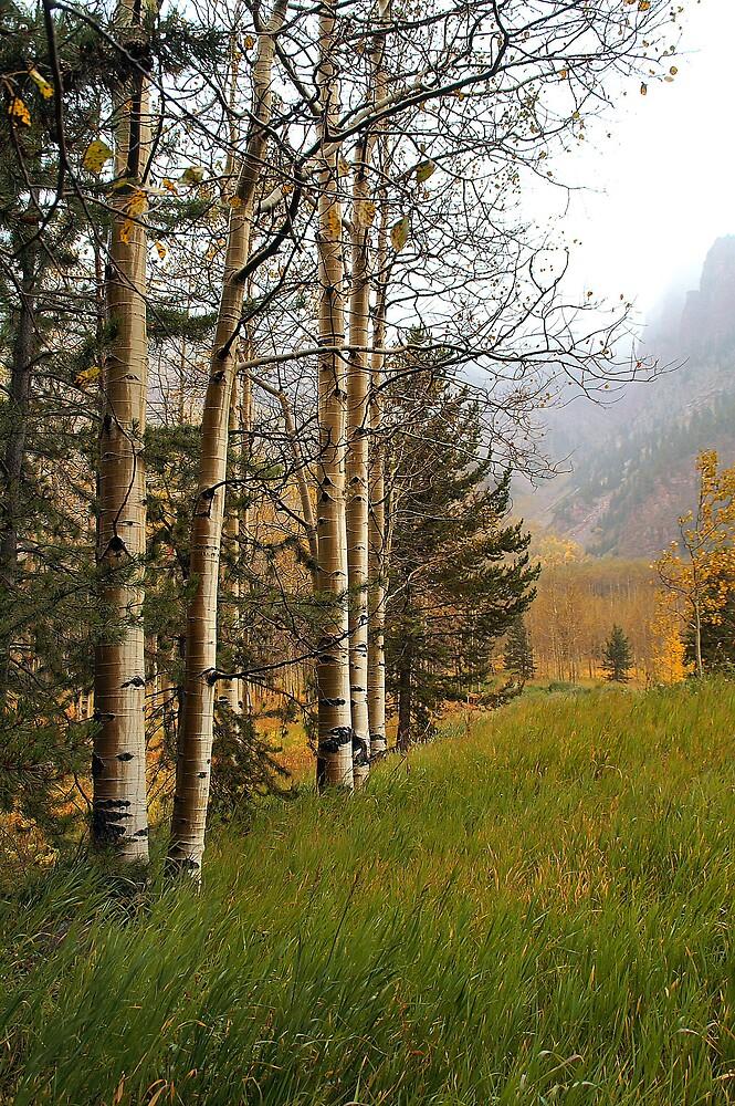 Aspen Trees on a Misty Foggy Day in Fall by Robert W. Spath II