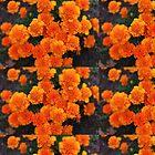 Mexican marigold flower by santoshputhran