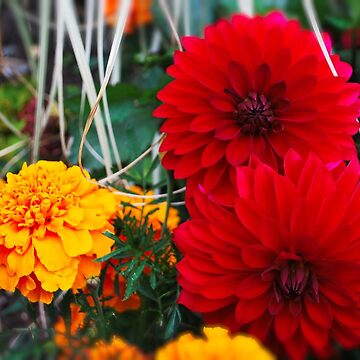 Red and yellow flowers shirts by santoshputhran