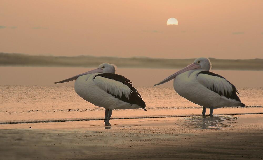 Pelican Sunrise by Jenny Dean