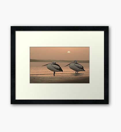 Pelican Sunrise Framed Print