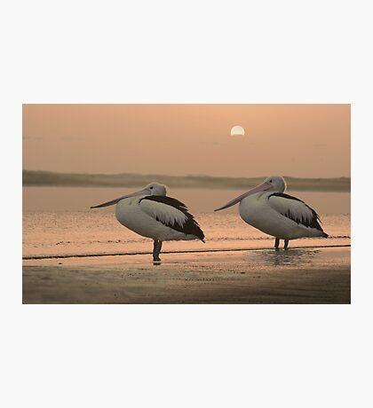 Pelican Sunrise Photographic Print