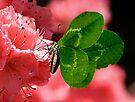 Lucky Butterfly by FrankieCat