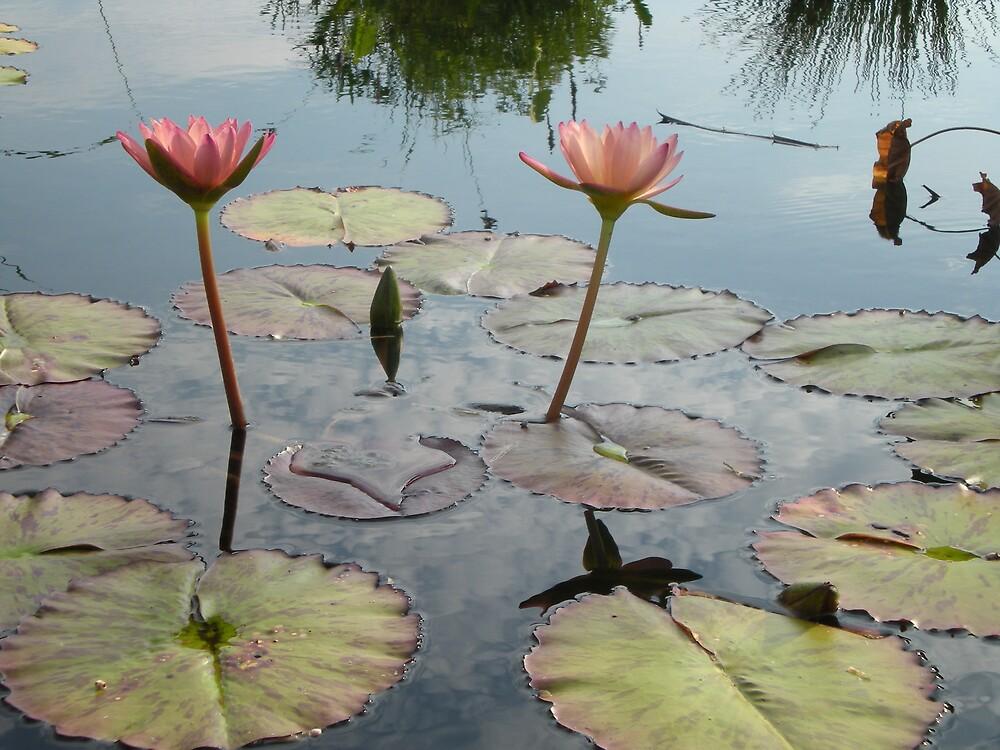 flowers by Kevin Barrett