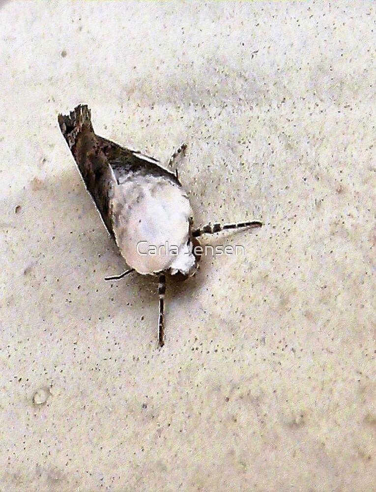 A Moth  by Carla Jensen