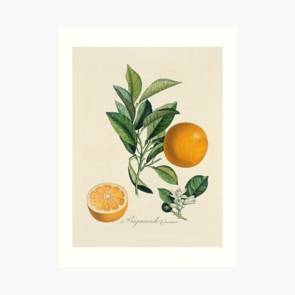 Kitchen, Fruit, Vintage, Typography, Quote, Home, Scandinavian Art Print
