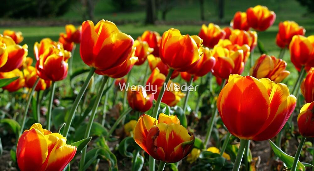 Tulips in Spring by Wendy  Meder