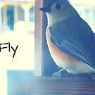 Fly bird by differentjasper