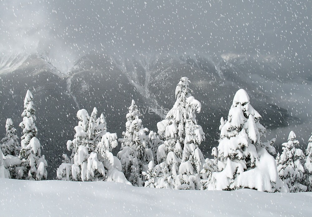 Banff snowy christmas by CliveHarris