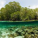 Raja Ampat Mangroves by muzy