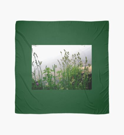 Grass on the banks of the Rideau River, Ottawa Scarf