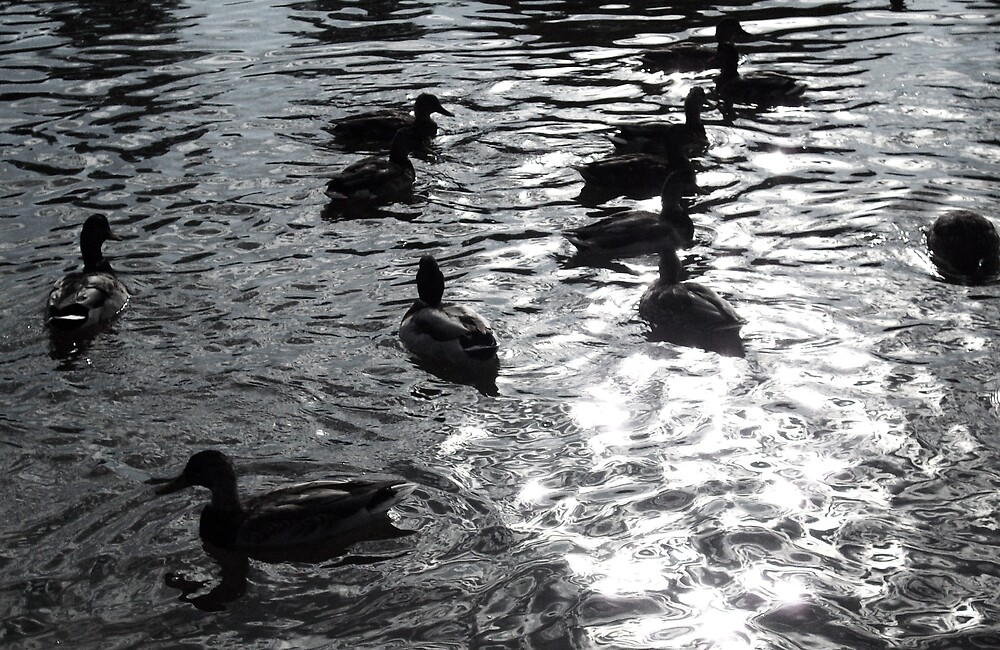 Duck family silhouette by Camilla Wall