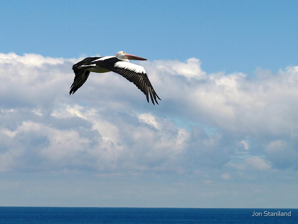 Pelican I by Jon Staniland