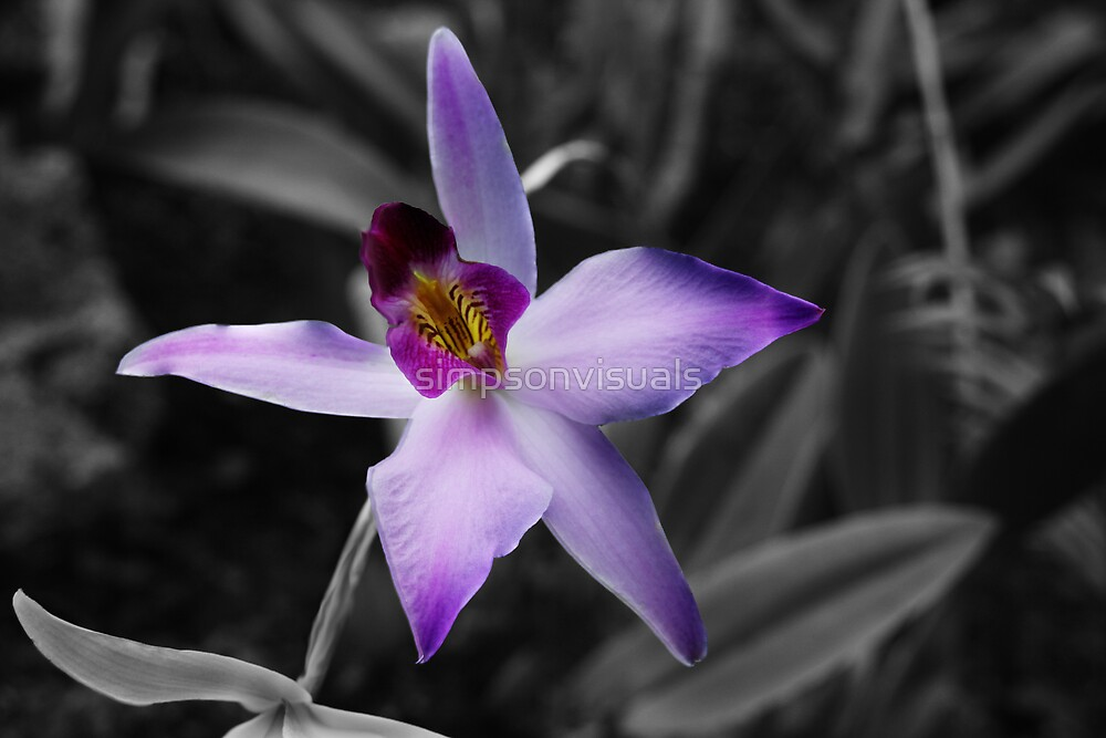 Purple Orchid Flower by simpsonvisuals
