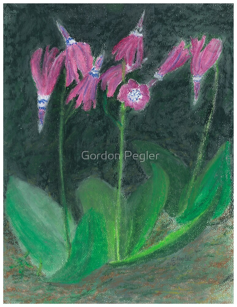 shooting stars  -oil pastels by Gordon Pegler