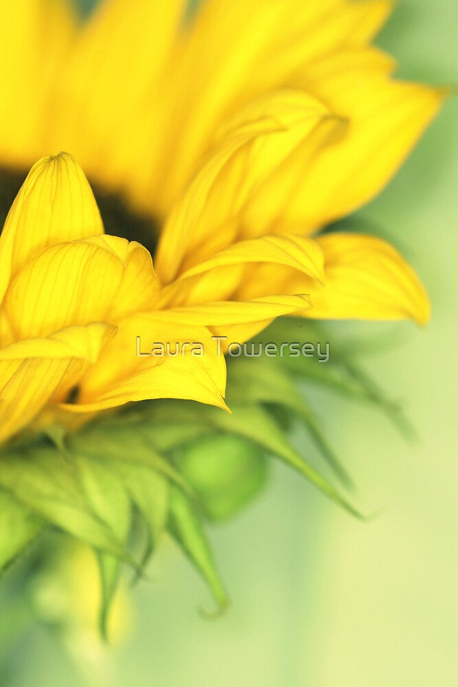 Sunny-flower by Laura Towersey