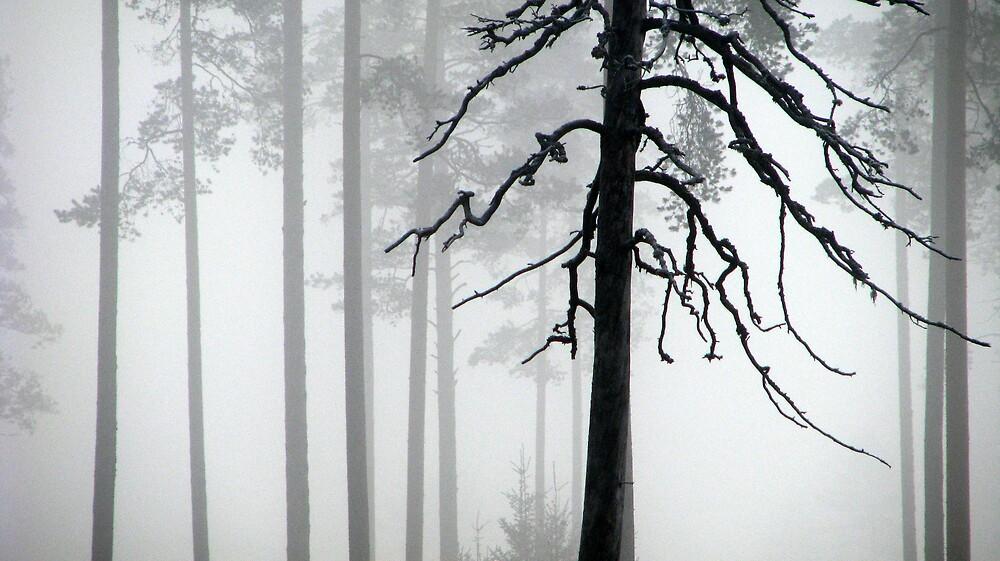 2.10.2009: Spirits of Woods by Petri Volanen