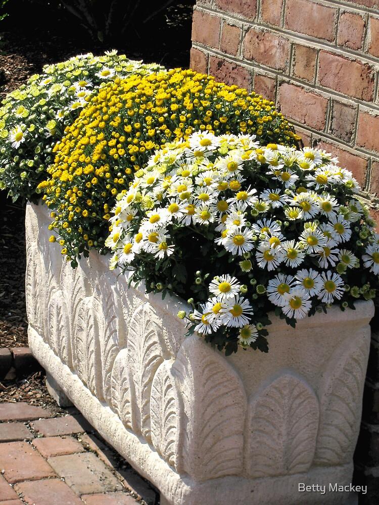 Chrysanthemum Trio by Betty Mackey