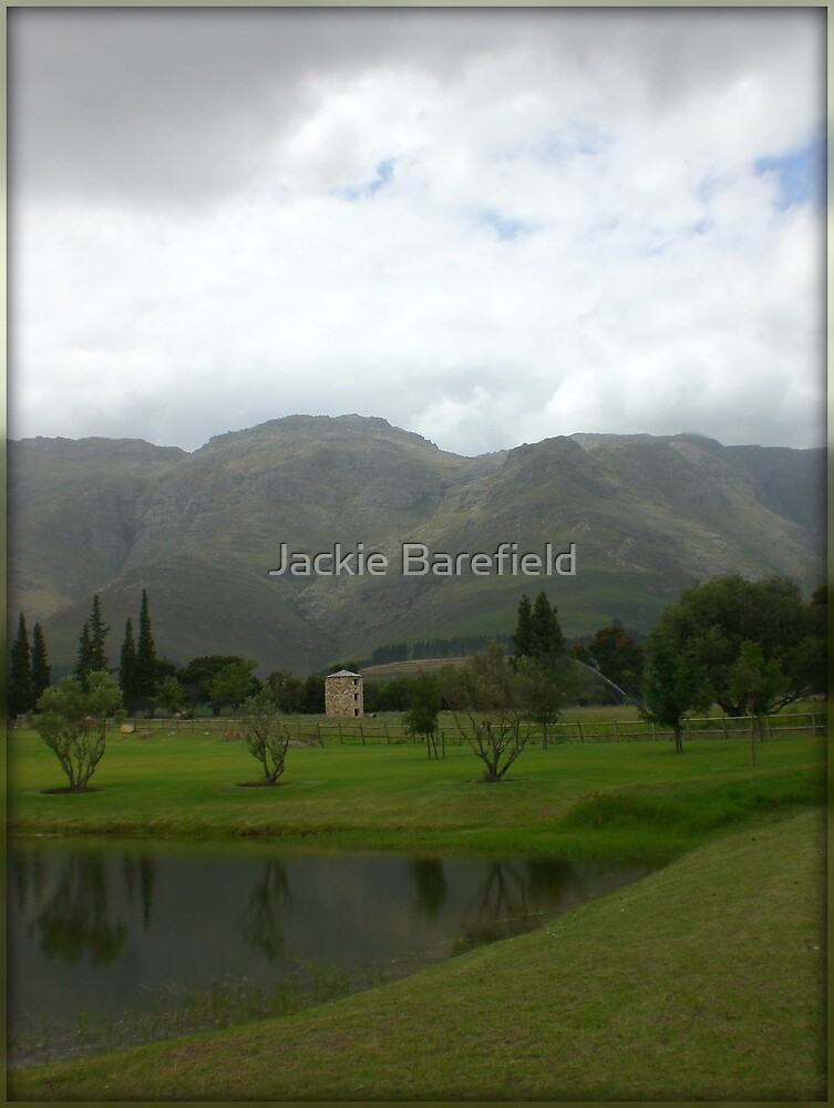 Stellenbosch Winelands Early Morning by Jackie Barefield