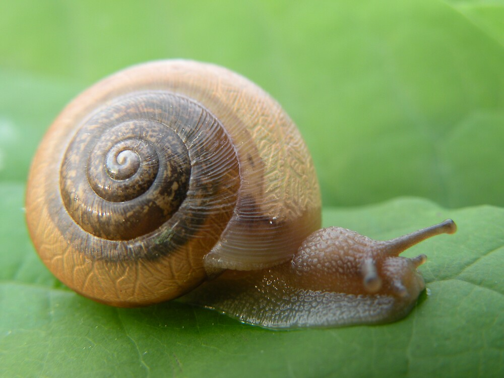 Snail by Nokie