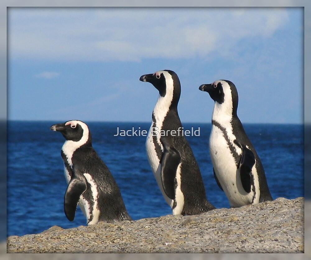 Penguins at Boulder Bay by Jackie Barefield
