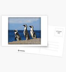 Penguins at Boulder Bay Postcards