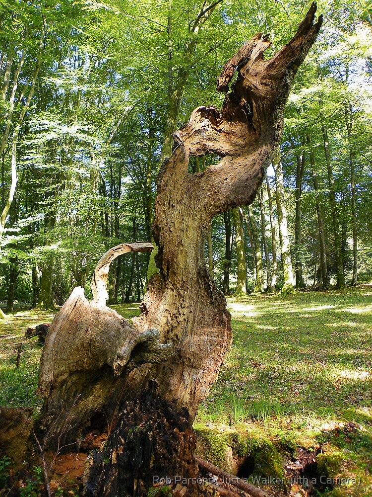 The New Forest: Natural Sculpture by Rob Parsons (Just a Walker with a Camera)