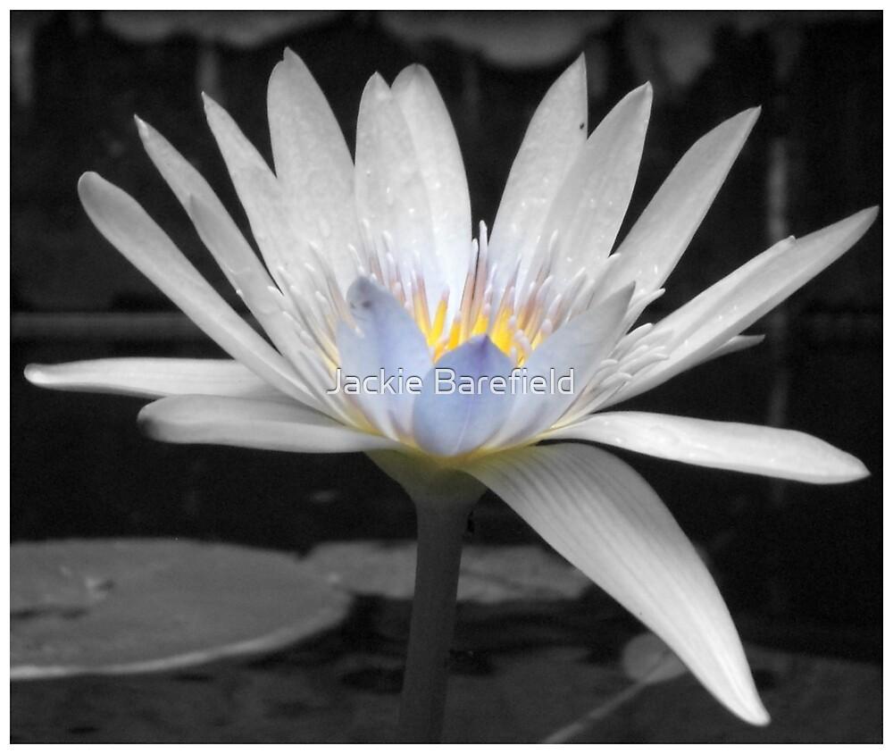 Waterlily by Jackie Barefield