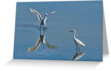 Little Egrets by Bob Culshaw