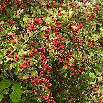 Autumn Berries by gingerdelight