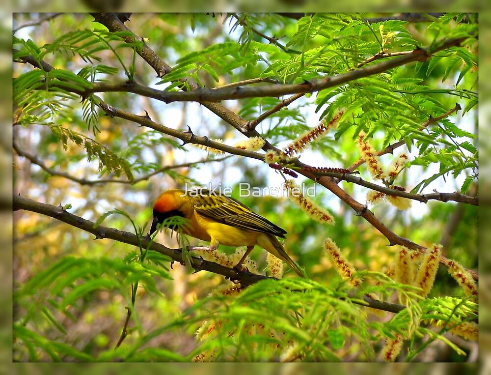 Yellow Bird, Indaba Hotel, Johannesburg by Jackie Barefield