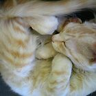 Curled Up Kitty by L.D. Franklin