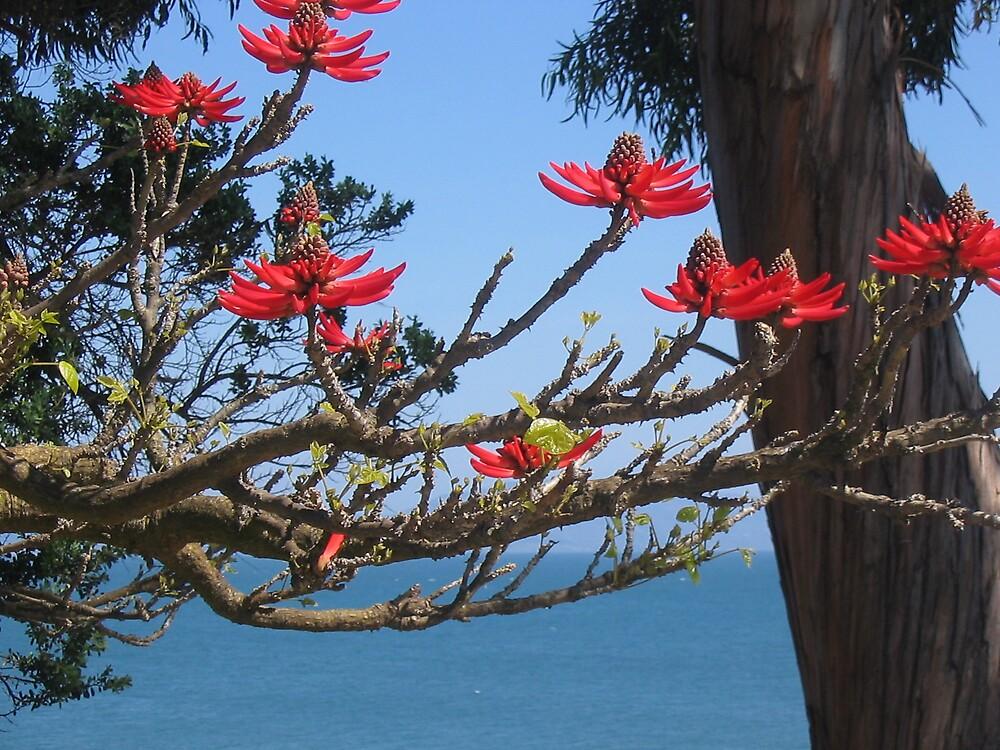 Santa Barbara Spring by issacbrock