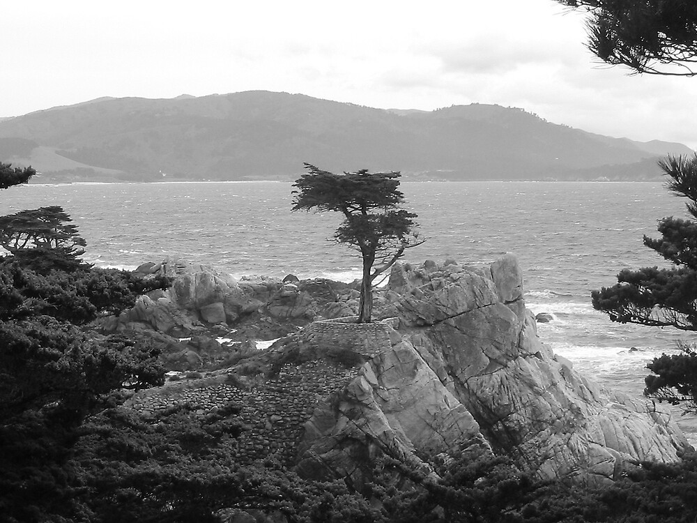 Cypress Point by issacbrock