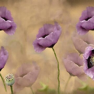 Soft Lavender Poppies in a Twilight Garden by JMarielle