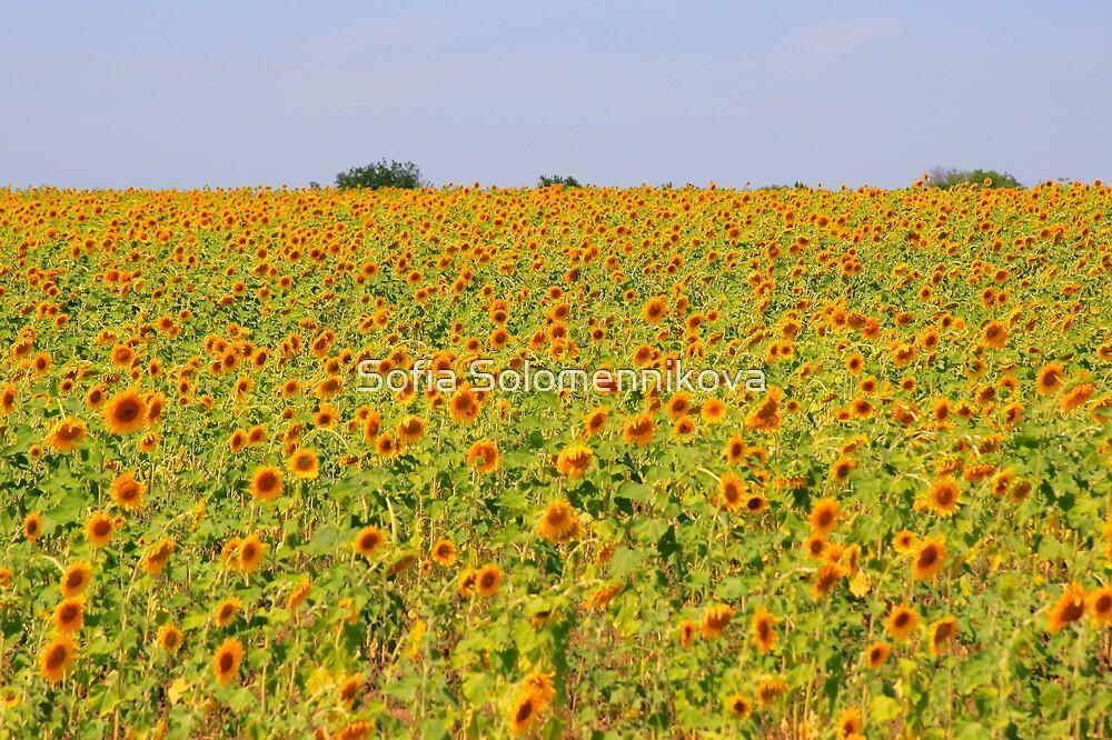 Sea of Sunflowers by Sofia Solomennikova