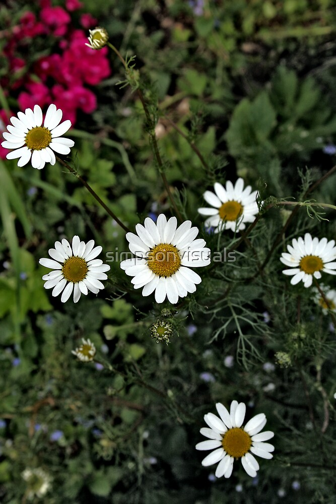 Wild Daisy Garden by simpsonvisuals