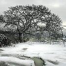 Winter by Jon Tait